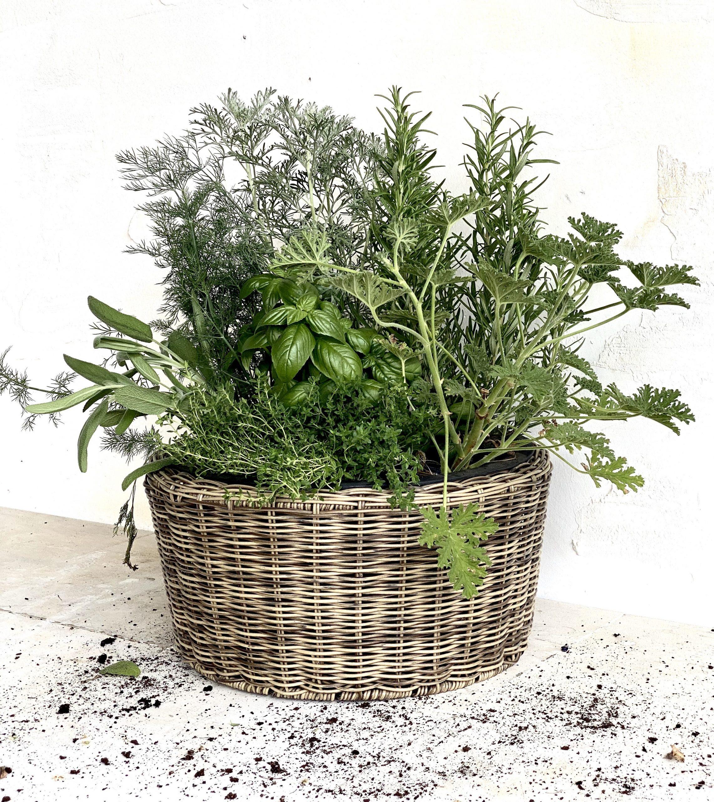צמחי תבלין לשימוש ביתי מושלם כמתנה לעובדים